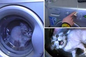 「誰叫牠不用貓砂!」俄羅斯情侶殘忍懲罰貓咪,把貓咪丟進洗衣機裡還按下啟動!