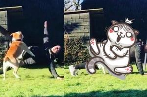 男子嘗試跟狗狗一起做「瑜伽」,但一開始做,就發現這是最糟糕的決定XDD