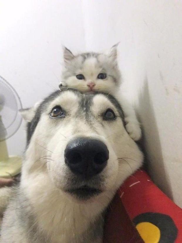大愛貓咪控