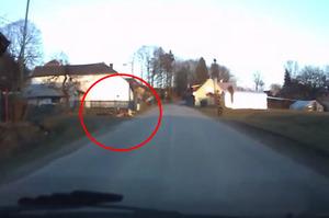 突然竄出聖伯納犬過馬路!ㄧ看牠「後面拖著」的東西...駕駛笑到車子快開不下去!!(附影片)