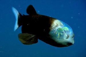 你無法相信牠們存在!這些動物近乎透明化,#8的腦袋超級像宇宙!