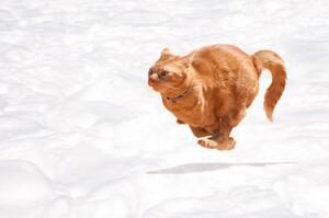 是怕臭、是興奮還是貓砂盆有魔力?貓咪上完大號後為什麼會抓狂飛奔?