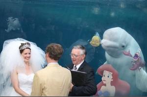 在水族館結婚引來「白鯨」參加婚禮的照片,引發一場修圖大戰.....網友:「那隻白鯨竟然是真的!!」
