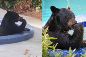 後院突然有聲音,結果看到一隻熊在我家泳池「泡澡沈思」....真的狂到網友笑昏!(影片)