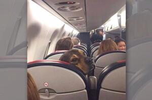 「叫你家小孩不要一直踢我椅背!」這些搭運輸工具的狗狗照片....每一張都讓人笑翻!