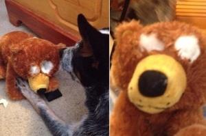 「馬麻熊熊看不見了怎麼辦!!」拿到新熊熊實在太開心,汪汪一時失手竟然把它...網友笑翻:「熊熊R.I.P」