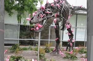 「在一分鐘內吃完就可以打破金氏世界紀錄了!」這七組鳥類搞笑犯蠢的照片...每一張都讓人笑翻XD