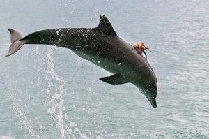 「旋轉跳躍我閉著眼」出海看海豚竟看到百年難得一見...海豚不停地要出水面!!得知真相後...連船長都笑翻XDD