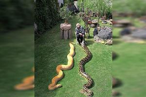 「奶奶傳一張照片叫我回家過端午...沒想到照片只剩下他一人」這5組療癒的蛇蛇照,每張都讓你應景端午節啊!!