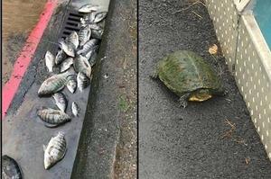 「魚居然淹死啦!!!」炸雨過後....這些生物居然都跑了出來!!!看到這些動物在街邊...真的令人傻眼又好笑XDD