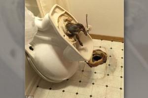 飯店廁所裡一直傳來怪聲,拆掉馬桶後房客當場傻眼...沒想到牠們真的可以從這裡出來!!