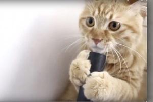 超萌小貓玩吸塵器,牠嘴巴突然被吸住後的爆笑反應...真的超級可愛!(影片)