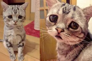 萌到犯規的無辜臉,這隻史上最哀傷貓咪,人氣在網路上已經破表!