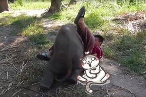 男子想跟小象來個「愛的抱抱」,沒多久他馬上後悔這個決定~~