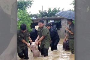 洪水來臨緊急帶著小豬撤離,仔細看牠臉上的表情...立刻笑噴啦XD