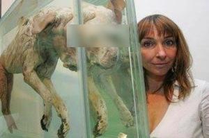女子把動物「屍體」當創意,被網友批極度殘忍,第三個作品已經被女神卡卡買下來了...