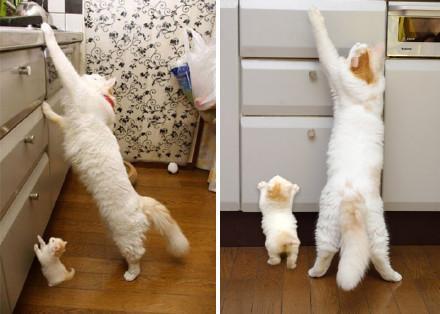孩子不能偷生!這些貓咪父子檔根本是一個模子印出來的,尤其是第7張超犯規的可愛阿!