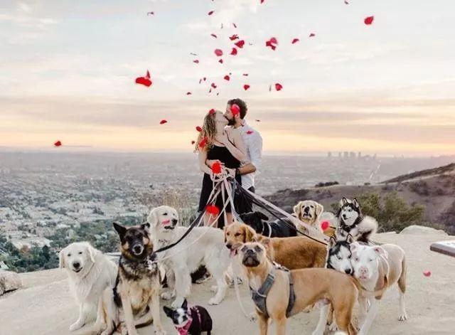 狗與愛的世界